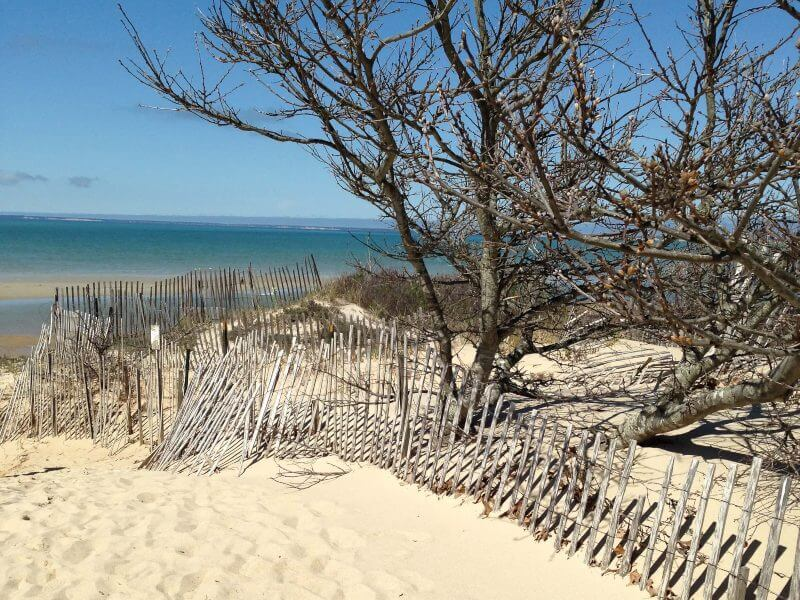 Cape Cod sand dunes 2015